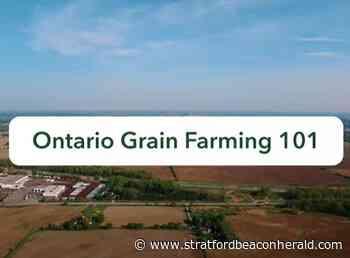 New GFO video series builds grain understanding - The Beacon Herald