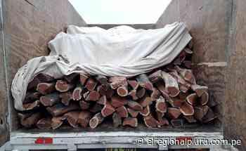 Piura: intervienen camión con 515 unidades de leña de algarrobo talado ilegalmente - El Regional