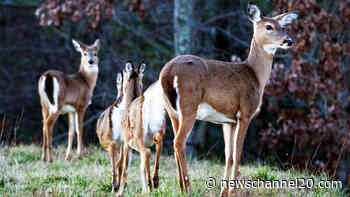Deer hunting may become legal along Lake Springfield - newschannel20.com