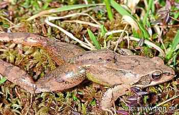 Das schnelle Sterben der Amphibien - Passauer Neue Presse