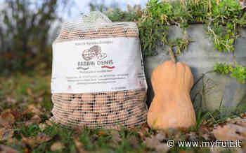 Noci: nel Forlivese si prevede un buon raccolto - Myfruit.it