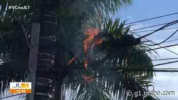 Poste de energia pega fogo na avenida Mário Covas em Ananindeua - G1