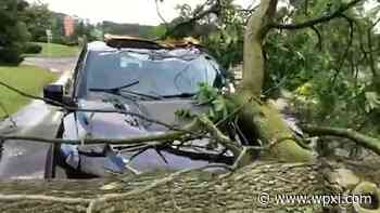 Tree on Car Cumberland Rd, McCandless – WPXI - WPXI Pittsburgh