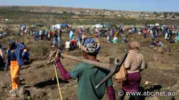 Diamond rush grips South African village as people flock to dig up unidentified stones