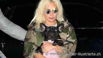 Lady Gaga und Co.: Diese Stars haben Hunde statt Kinder - Schweizer Illustrierte