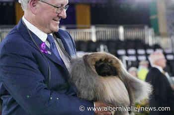 Prime Peke! Wasabi the Pekingese wins Westminster dog show - Alberni Valley News