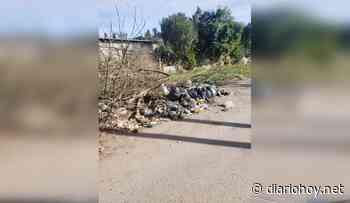 Denuncian que hay una invasión de ratas en barrio San Carlos - Diario Hoy