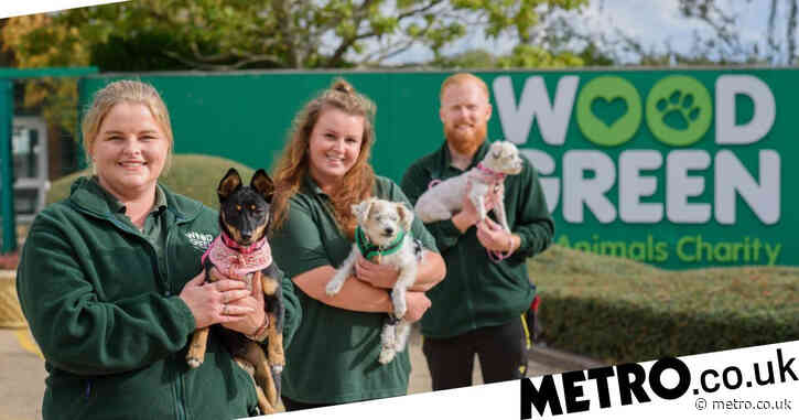 Meet the dog charity that matches up pooches to new owners by personality