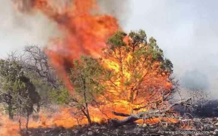 Incendio en Casas Grandes afecta en 4 mil hectáreas; lleva una semana activo - El Sol de México