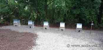 Saint-Jean-Pied-de-Port : des ruches communales pour favoriser la biodiversité - Sud Ouest