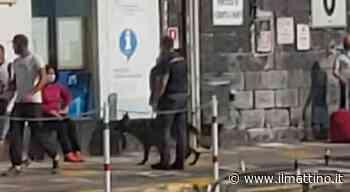 Capri torna alla normalità: rieccoi cani antidroga in azione sul porto - Il Mattino.it - ilmattino.it