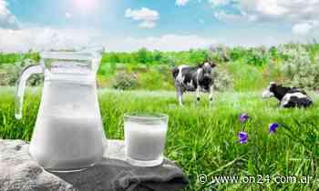 El precio de la leche se triplica desde que sale del tambo y llega a nuestro desayuno - ON24
