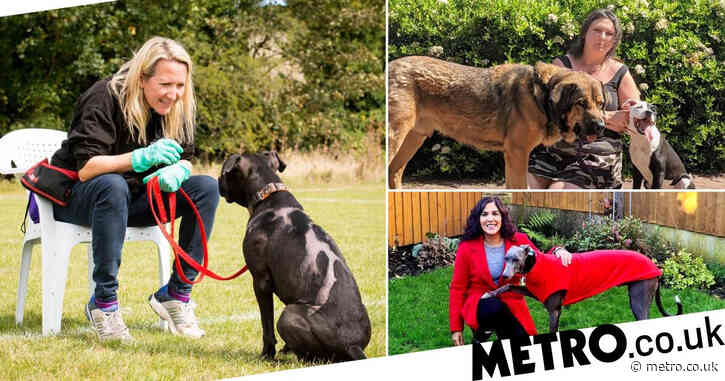 'We changed their lives. And they changed ours': Animal-lovers reveal how their rescue pets transformed their lives
