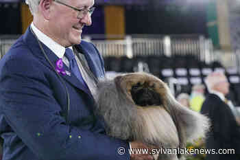 Prime Peke! Wasabi the Pekingese wins Westminster dog show - Sylvan Lake News