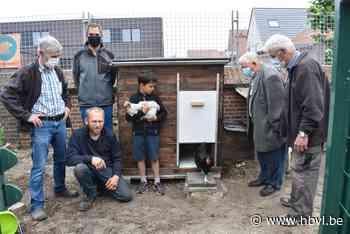 Kadee-kippen krijgen een nieuw hok (Bree) - Het Belang van Limburg Mobile - Het Belang van Limburg