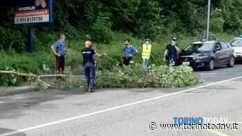 A San Mauro Torinese gli alberi continuano a cadere sulla strada, ma stavolta non passava nessuna auto - TorinoToday