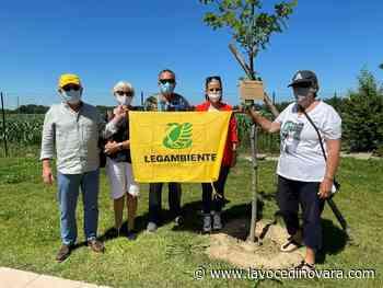 Oleggio, due alberi donati al Crystal park, la nonna: «Voglio solo che non si dimentichi» - La Voce Novara e Laghi - La Voce di Novara