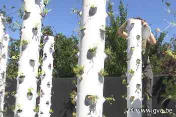 Antwerpenaar installeert verticale tuinen, waar ook Mark Coucke fan van is - Gazet van Antwerpen