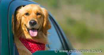The worst excuses given for leaving dogs in hot cars