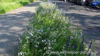 Blühstreifen für Insekten - Wetterauer Zeitung