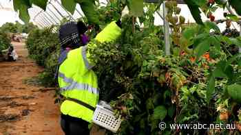 New agriculture visa established for UK and Australian workers