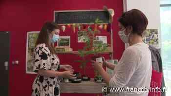 """À Valbonne, une """"bouturothèque"""" au milieu des livres pour échanger ses plantes - Franceinfo"""
