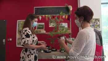 """À Valbonne, une """"bouturothèque"""" au milieu des livres pour échanger ses plantes - nouvellesduweb"""