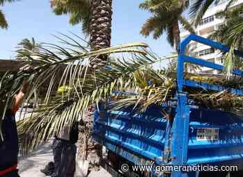 En marcha la campaña municipal de poda de palmeras en San Sebastián de La Gomera - Gomeranoticias
