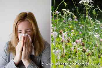 Blackburn's pollen count is set to be 'very high' this week