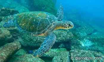 Novo habitat de tartarugas-verdes é localizado no Rio de Janeiro - Diário do Rio de Janeiro