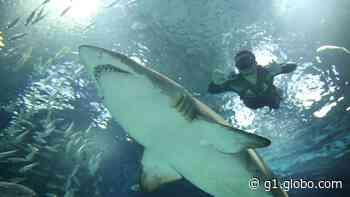 Morre Margarida, primeiro grande tubarão a chegar ao AquaRio - G1
