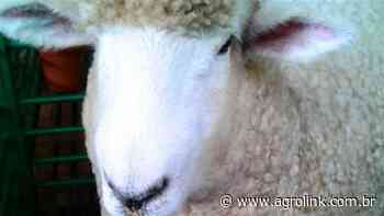 SE: criadores de ovinos participam de curso de casqueammento em Tobias Barreto - Agrolink