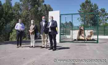 Câmara de Pombal expande recolha de 'monstros' com a criação de mais cinco parques - Notícias de Coimbra