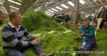 Countryfile viewers horrified by Matt Baker dairy farming segment