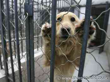 US bans import of pet dogs to prevent rabies outbreak