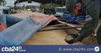 Gendarmería secuestró 300 toneladas de soja en Salta y Corrientes - Cba24n