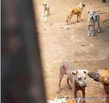 Denuncian que casa de Bella Vista es usada para tener decenas de perros en mal estado - Diario Libre