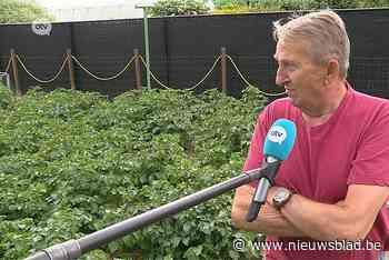"""PFOS-vervuiling : """"Ik blijf mijn groenten uit de tuin eten"""""""