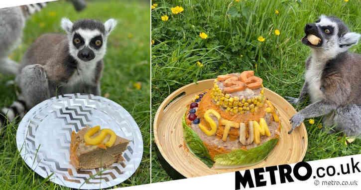 Britain's 'oldest living lemur' celebrates 35th birthday
