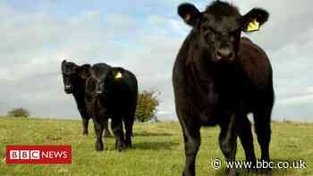 Farmers raise 'deep concerns' over Australia trade deal
