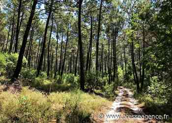 SAINT RAPHAEL : Campagne de financement participatif nommée « Des forêts et des Hommes » - La lettre économique et politique de PACA - Presse Agence