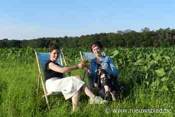 Graanbar verrijst tussen de maïs en zonnebloemen