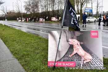 """Animal Rights en GAIA in beroep tegen vergunning voor uitbreiding """"horrorslachthuis"""" - Het Nieuwsblad"""