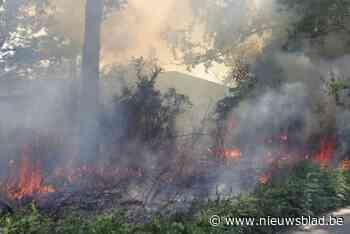 """Twee keer brand in Gentse natuurgebieden: """"Iets kleins zoals een sigaret kan genoeg zijn"""" - Het Nieuwsblad"""