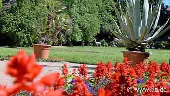 Sommerblumen verschönern das Stadtbild von Eisenach - Thüringische Landeszeitung