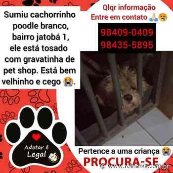Rolim de Moura- Família procura por cãozinho desaparecido - ROLNEWS