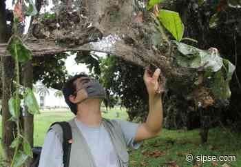 """Lluvias barren con la """"catedral de las arañas"""" en Chetumal - sipse.com"""