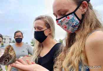 """Chetumal: Realizan """"Reciclando Por una liberación de mariposas"""" en Mahahual - sipse.com"""