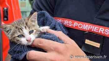 Deux chats miraculés à Sarcelles et Eaubonne - Le Parisien