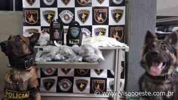 Cadela Kira e 5° Baep encontram casa cheia de drogas em Osasco - Visão Oeste